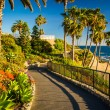 Flowers and view of the Pacific Ocean along a walkway at Heisler — Stock Photo #65927679