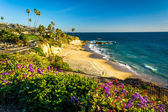 Flowers and view of the Pacific Ocean at Heisler Park, in Laguna — Stock Photo