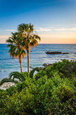 View of palm trees and the Pacific Ocean from Heisler Park, in L — Stock Photo