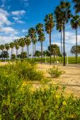Flowers and palm trees at Shoreline Aquatic Park, in Long Beach, — Stock Photo