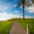 Palm trees and path at Hilltop Park, in Signal Hill, Long Beach, — Stock Photo #67757505