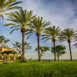 Palm trees at Hilltop Park, in Signal Hill, Long Beach, Californ — Stock Photo #67757551