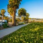 Flowers and palm trees along a bike path in Santa Barbara, Calif — Stock Photo #70617633