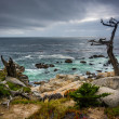 The Ghost Tree and the Pacific Ocean, seen from the 17 Mile Driv — Stock Photo #71043547