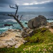 The Ghost Tree and the Pacific Ocean, seen from the 17 Mile Driv — Stock Photo #71043601