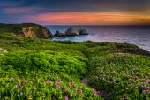Flowers and trail on a bluff above Rodeo Beach at sunset, at Gol — Stock Photo