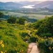 Wildflowers along a trail and view of the Columbia River at suns — Stock Photo #72471415