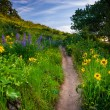 Wildflowers along a trail, at Tom McCall Nature Preserve, Columb — Stock Photo #72471447