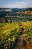 Fiori selvatici lungo un sentiero, a Tom Mccall Nature Preserve, Columb — Foto Stock