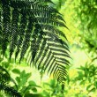 Contrasting Green Fern Forest Foliage — Stock Photo #53731295
