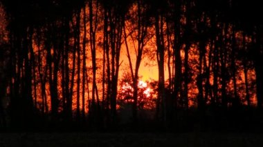 Sunset the red sun through the trees. Timelapse. — Stock Video