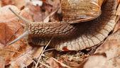 Snail in autumn — Stock Photo