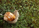 Garden snail on moss — Foto Stock