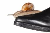 Snail on boot toe — Stock Photo