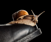 Slow snail on boot toe — Stock Photo