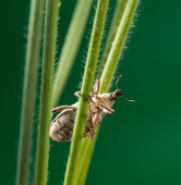 Snout beetle on grass — Stock Photo