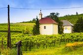 Winery, vineyard landscape. — Stock Photo