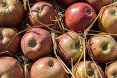 Juicy apples. — Foto de Stock