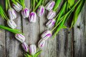 Tulpen auf hölzernen hintergrund — Stockfoto