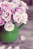Pastel roses — Stock Photo