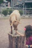 Get på en gård — Stockfoto