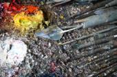 オイル塗料とペイント ブラシのパレット — ストック写真