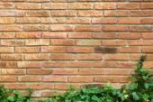 Leaves on brick wall for wallpaper — Fotografia Stock