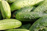 Cucumber background — Stock Photo