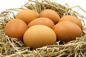 Eggs in a nest. — Stock Photo