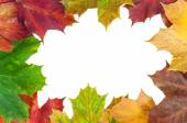 Frame made of autumn maple leaves — Stock Photo