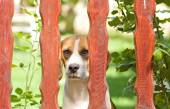 Dog behind fence — Stock Photo