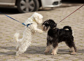 Dogs sniffing — Stock Photo