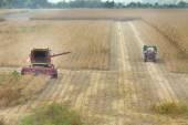 Soybean harvest — Стоковое фото