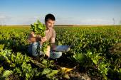 Farmer in sugar beet field — Stock Photo