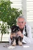 Dog on examination — Stock Photo