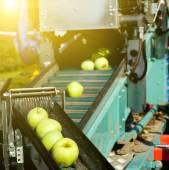 Cosecha de manzanas — Foto de Stock