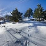 Mountain peak in snow — Stock Photo #62536585