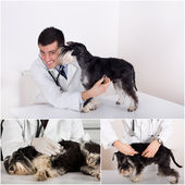 Veterinary care collection — Stock Photo
