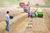 Businessman on wheat harvest — Stock Photo