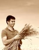 Farmer with ripe wheat — Stock Photo