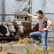 Farmer with young cattle — Stock Photo #71622233