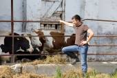 Farmer with young cattle — Stock Photo