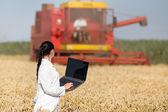 麦畑の女性農学 — ストック写真
