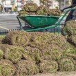 Heap of sod rolls for installing new lawn — Photo #56121637