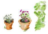 Isolated garden pots — Stock Photo