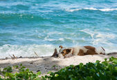 Hunden vila på stranden — Stockfoto
