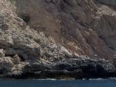 Colony of seagulls  — Stok fotoğraf