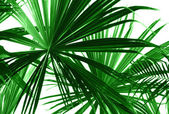 Abstract green palm leaves — Stock Photo