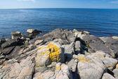 Blue beach landscape yellow lichen — Stock Photo