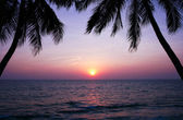 Beautiful sunset over the sea and palm trees silhouettes. — Stock Photo